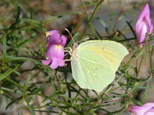 butterfly-1792337_1920