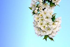 Flores de primaveira